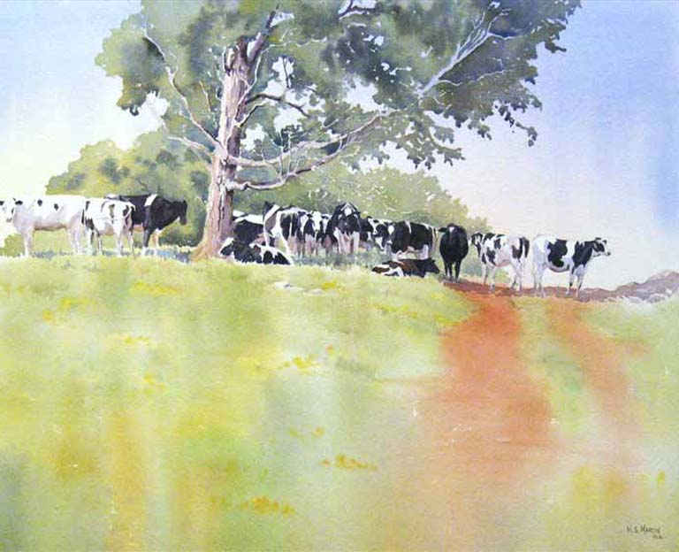 West Brome Cows